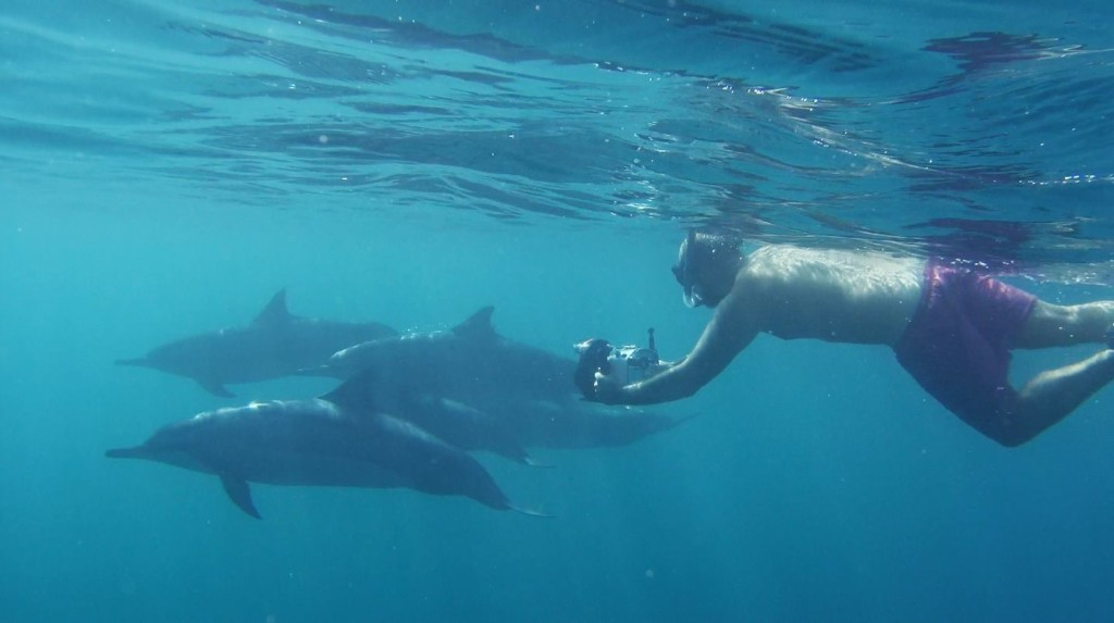 delfin-ben