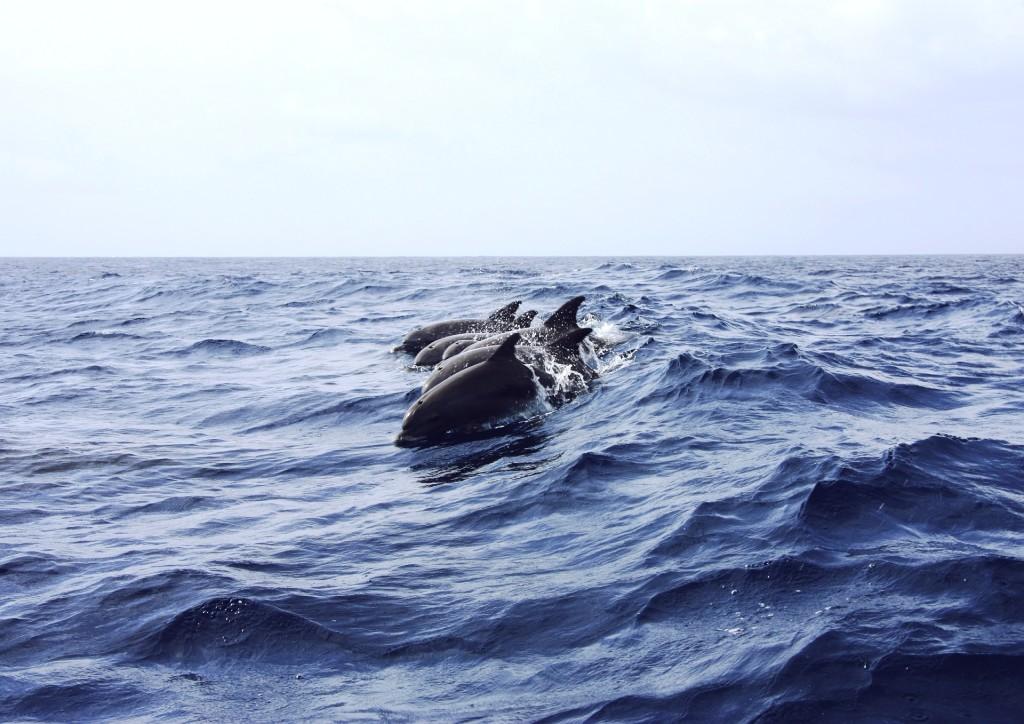 dolphin-402288_1920